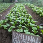 Peasant women survive pandemic impact with agroecology