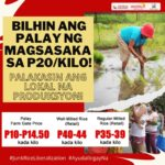 Groups reiterate demand to buy palay of local farmers, boost local production amid increasing rice prices